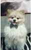 Formal Pet Bowtie Offer