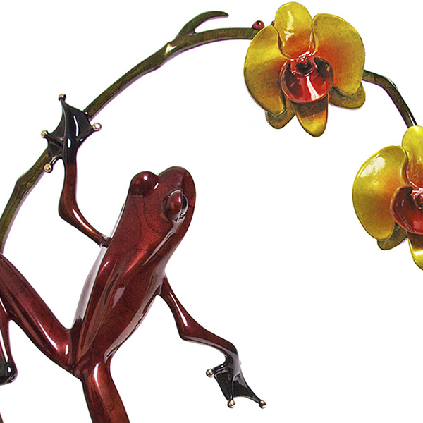 Orchid bronze frog by Tim Cotterill