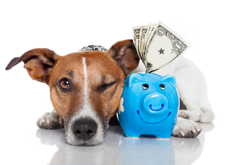 Protect Your Apartment: Save Your Pet Security Deposit