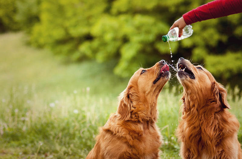 How To Keep Your Pet Hydrated
