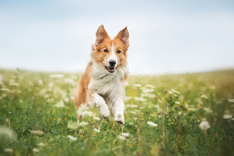 "Pet Loss Prevention:  Ways to Make Sure Your Home Is ""Escape Proof"""