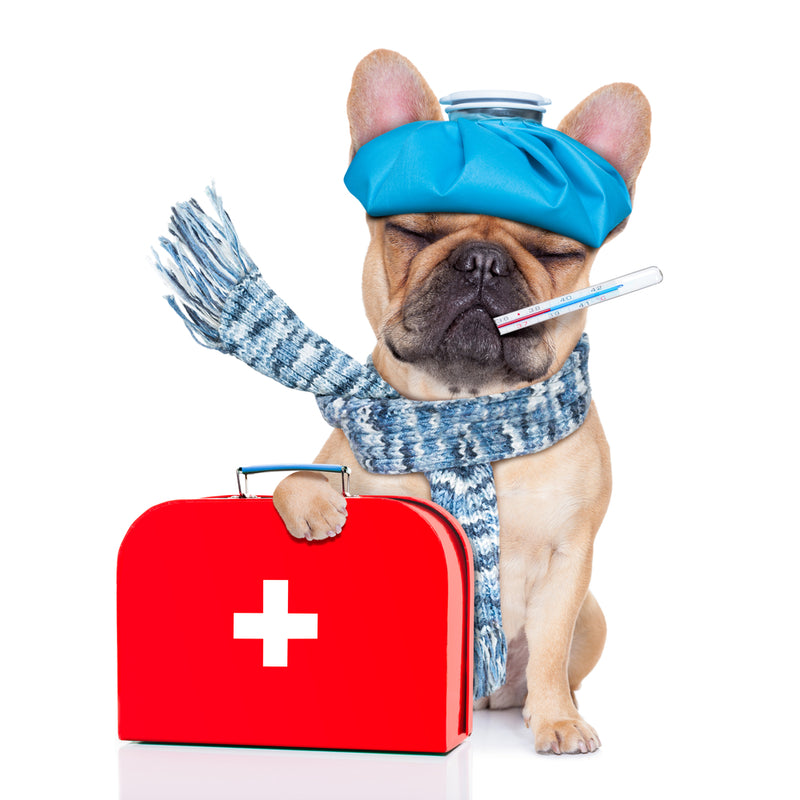 Dog And Cat First Aid Tips