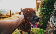 Understanding Dog Anxiety (The Definitive Guide)
