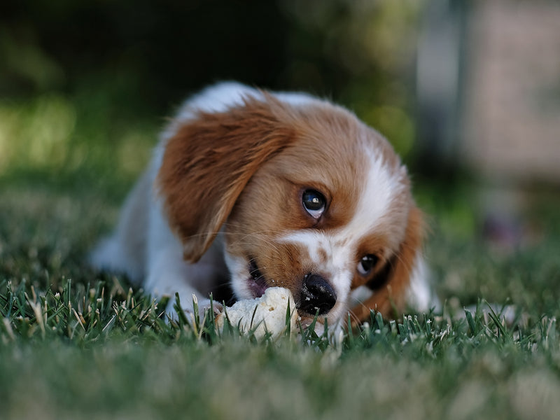 How To Proactively Puppy-Proof Your Home