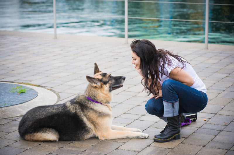 Training Tips For Dog Owners