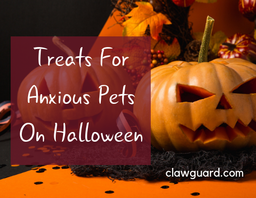 halloween and anxious dogs and cats
