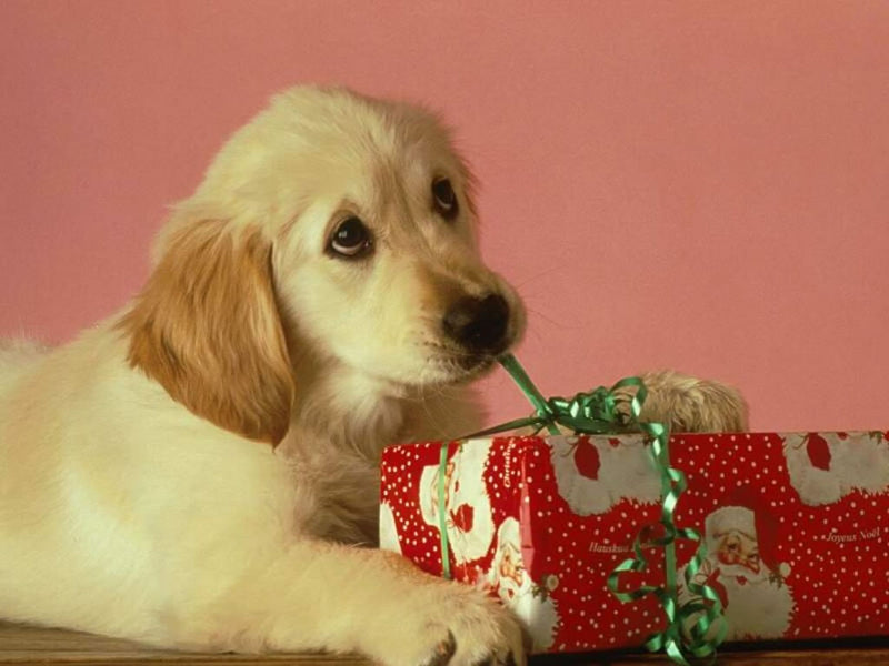 Last Minute Christmas Gift Ideas For Pet Lovers