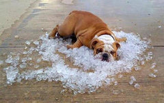 6 Tips to Help Your Dog Stay Cool All Summer