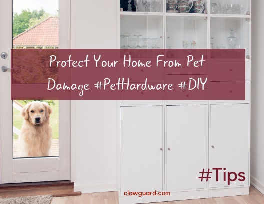 Quick & Easy Way To Protect Your Doors From Dog Damage