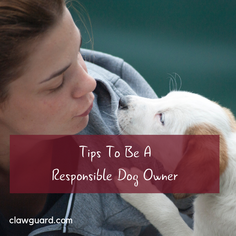 It's Responsible Dog Ownership Month