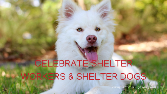 National Shelter Appreciation Week: Celebrate Pets & Shelter Workers
