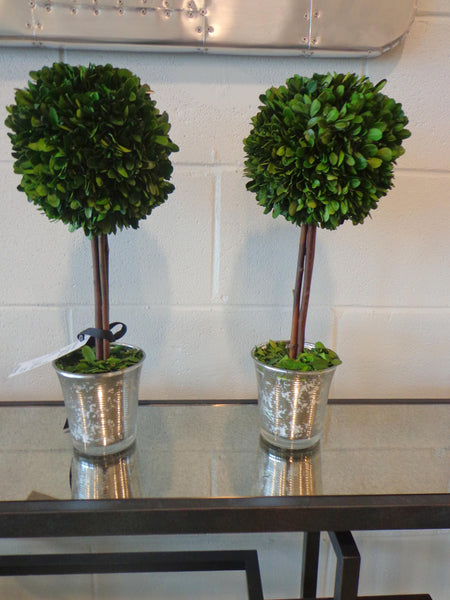 Boxwood (large)