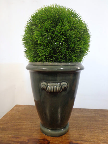 Round plant in grey pot