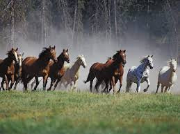 My Fascination and Passion for Horses. Where did it come from?
