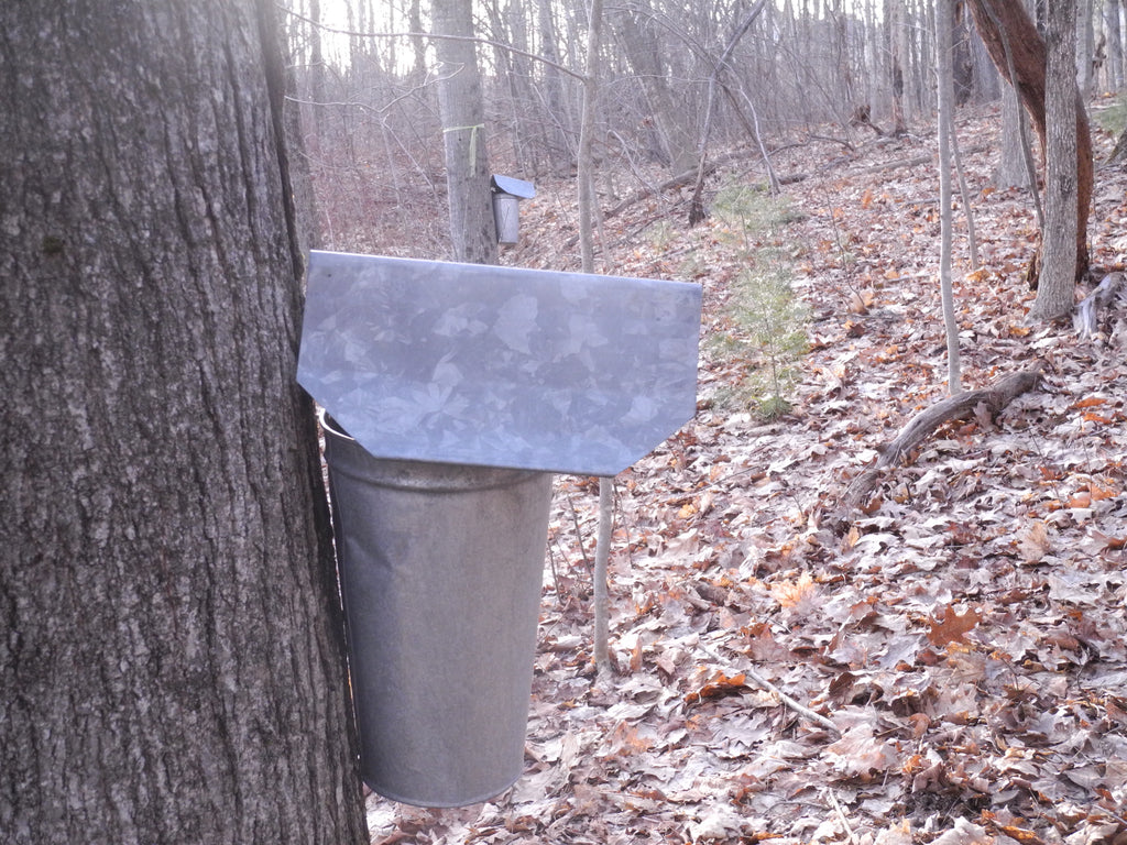 Maple syrup at a small-scale!