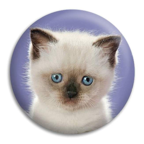 Kitten With Blue Eyes Button Badge
