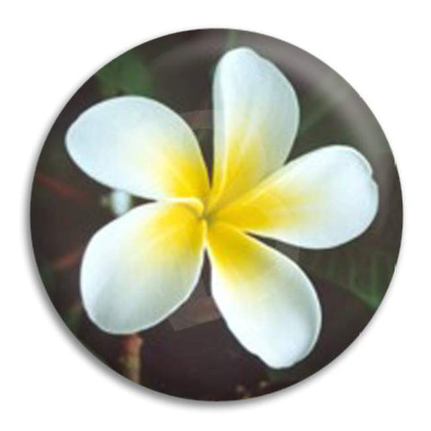 Frangipani Button Badge