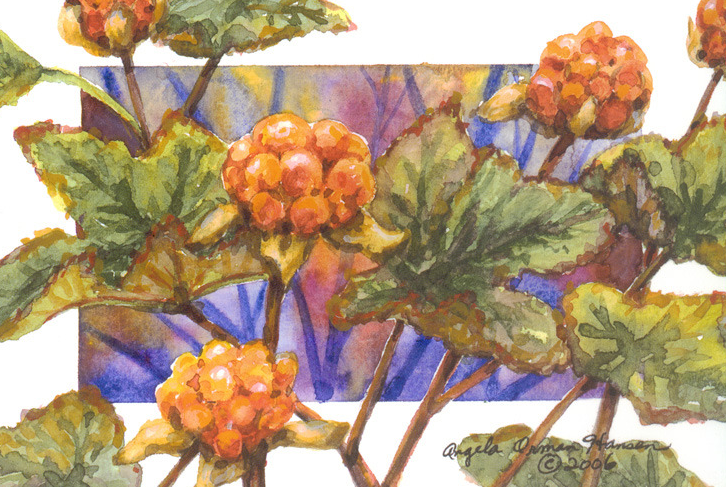 Salmonberry or Cloudberry