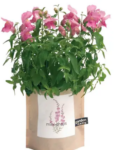 Potting Shed Creations - Snapdragon Garden In A Bag