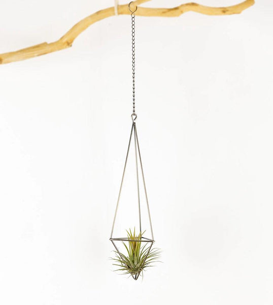 Airplant and Holder Set