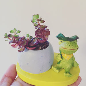 The Frog Prince Succulent