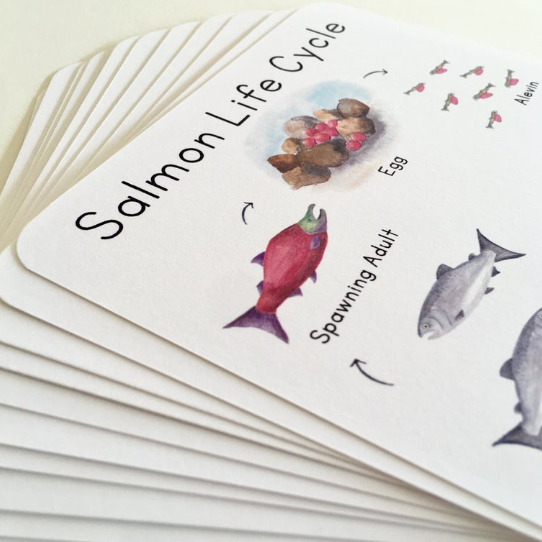 Salmon Life Cycle Cards, Life Cycle Study, Homeschool Science
