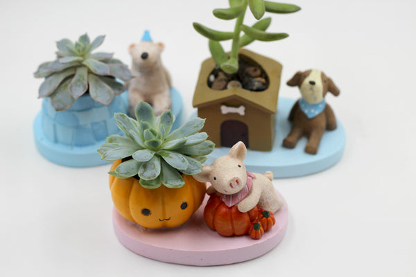 Piggy Succulent with Pumpkins