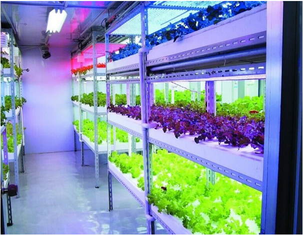 Choosing LED Grow Lights For Plants