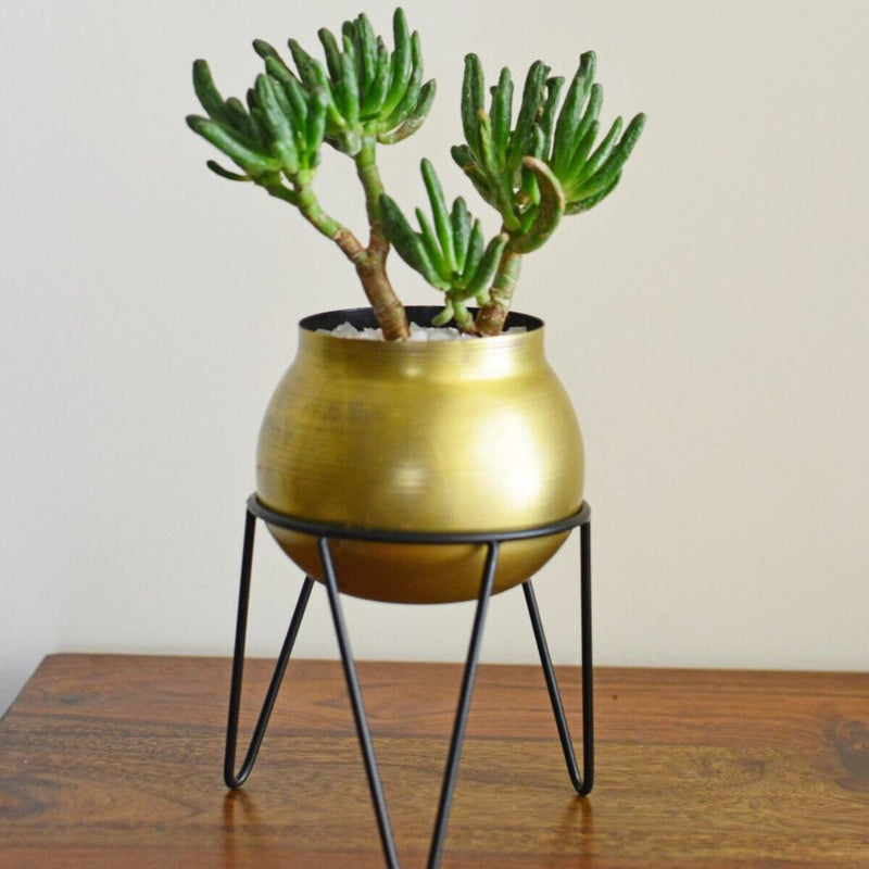 Crescent Gold Planter Medium