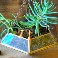 The Floating Grasslands Terrarium DIY Kit