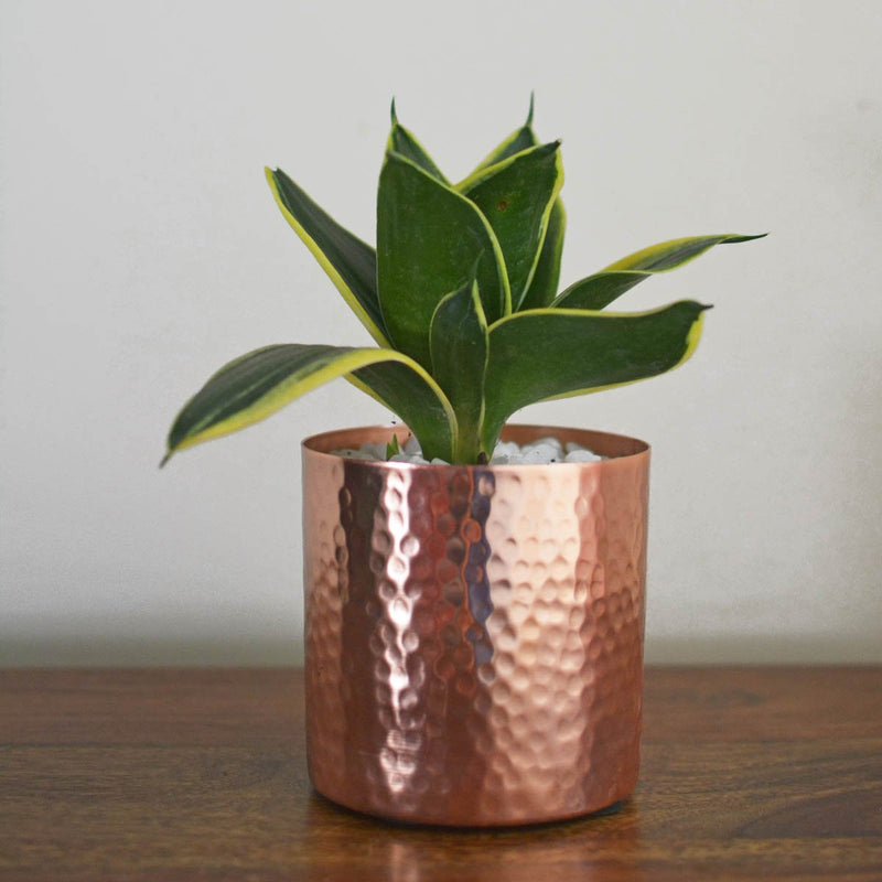 Hammered Metal Desktop Planter