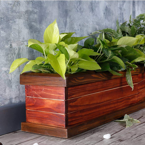 Mahogany & Walnut Handmade Triple Partition Wooden Planter at Qtrove