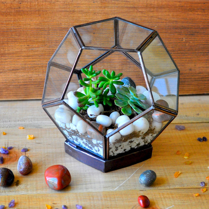 The Tibetan Bloom Terrarium DIY Kit