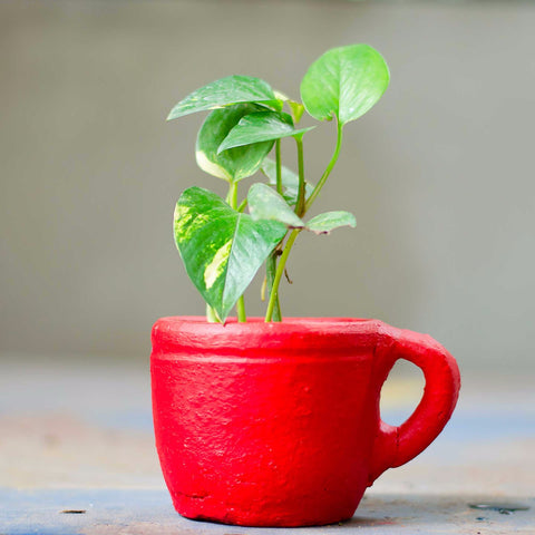 Terracotta Coffee Cup Planter
