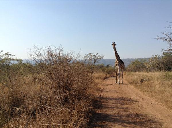 Trekking in Africa - Take a walk on the wild side
