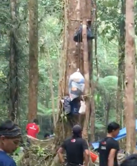 Tahan bags in tree