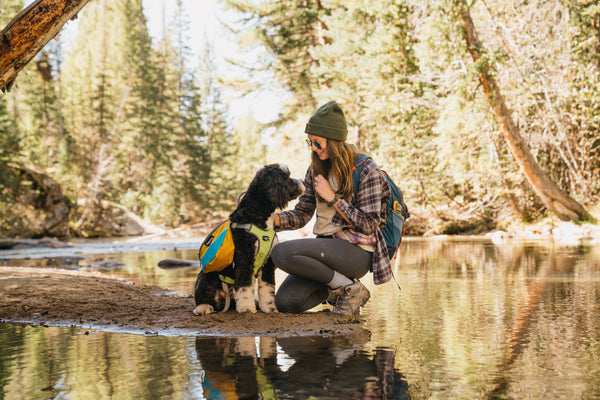 The Ultimate Guide to Pet Health and Safety When Hiking