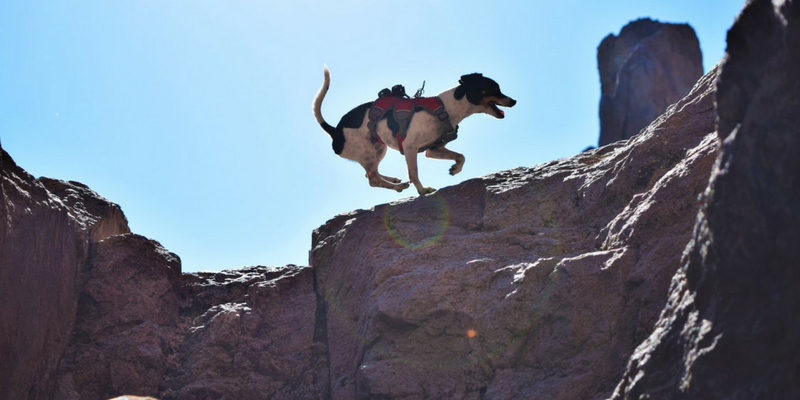 How To Adventure With A Pint-Sized Pup