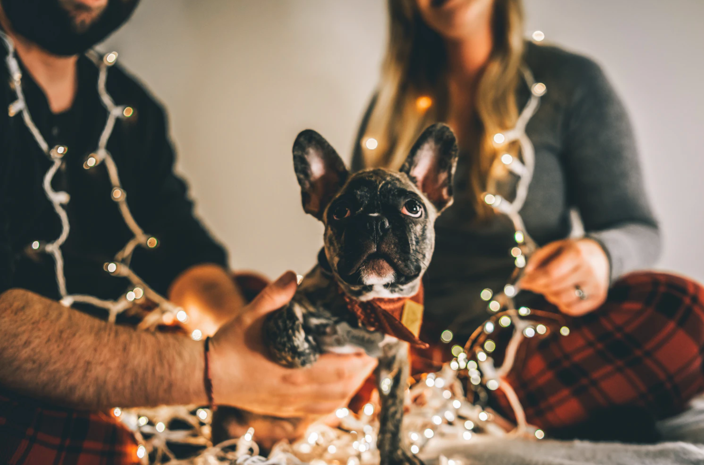 8 Holiday Safety Tips for Dog Owners