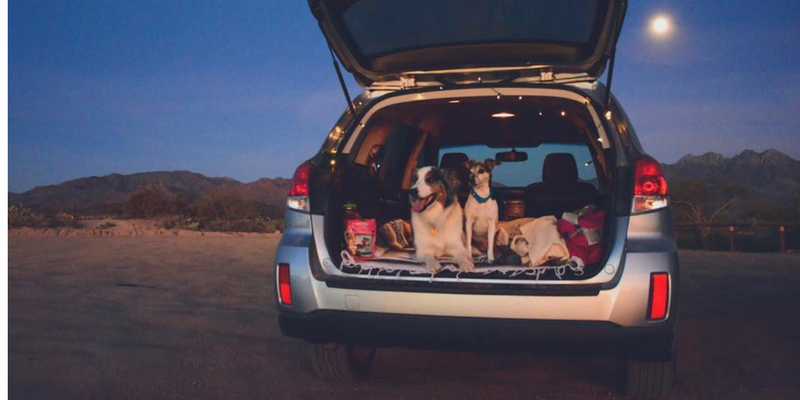 How To Keep Your Dog Safe When Traveling In A Car