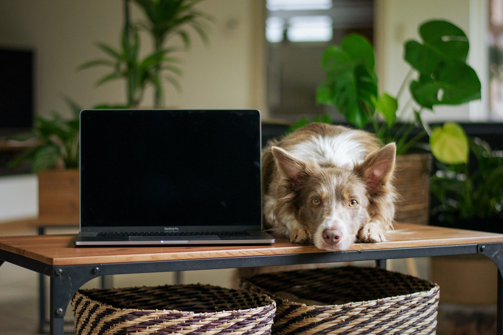 What It's Like to Work From Home With Your Dog