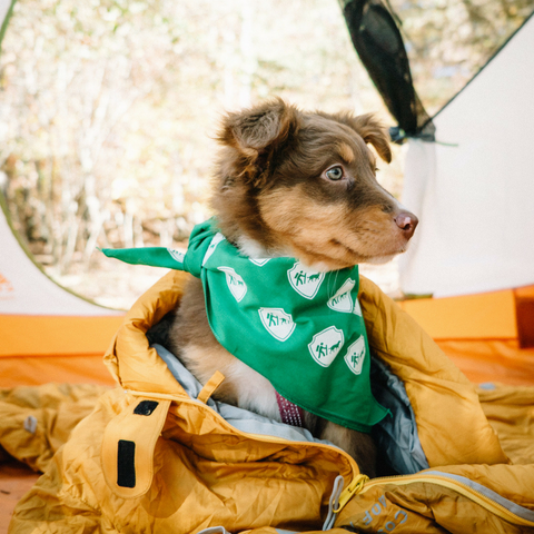 Camping With Dogs Bandana