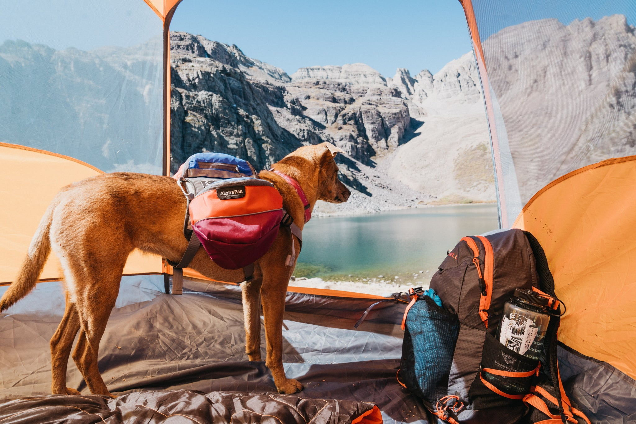Dog in tent at Cathedral Lake