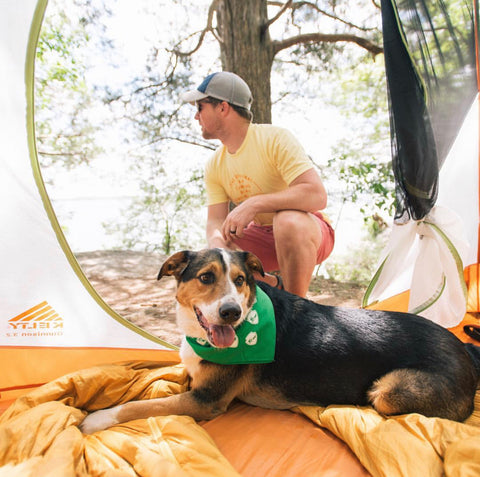 Dog laying in tent in the woods