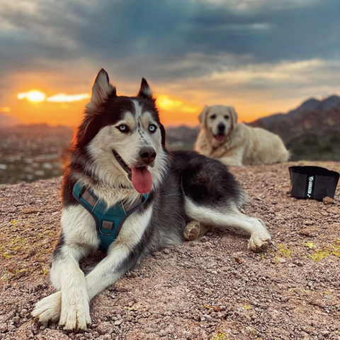 Two dogs laying down in front of a sunset