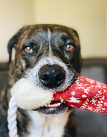 dog with christmas gift toy