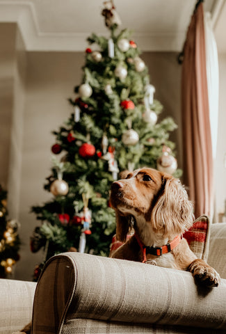 dog sitting by christmas tree