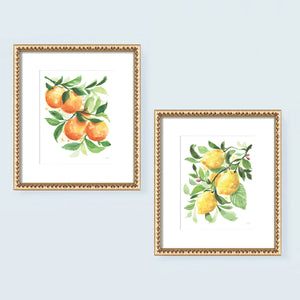 Watercolor Lemons and Oranges fruit kitchen wall art print set. Watercolor painting by artist Michelle Mospens.