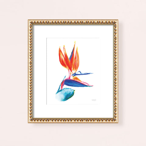 Watercolor tropical bird of paradise flower wall art print.