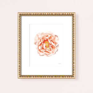 Load image into Gallery viewer, Watercolor Peach Peony Flower Art Print